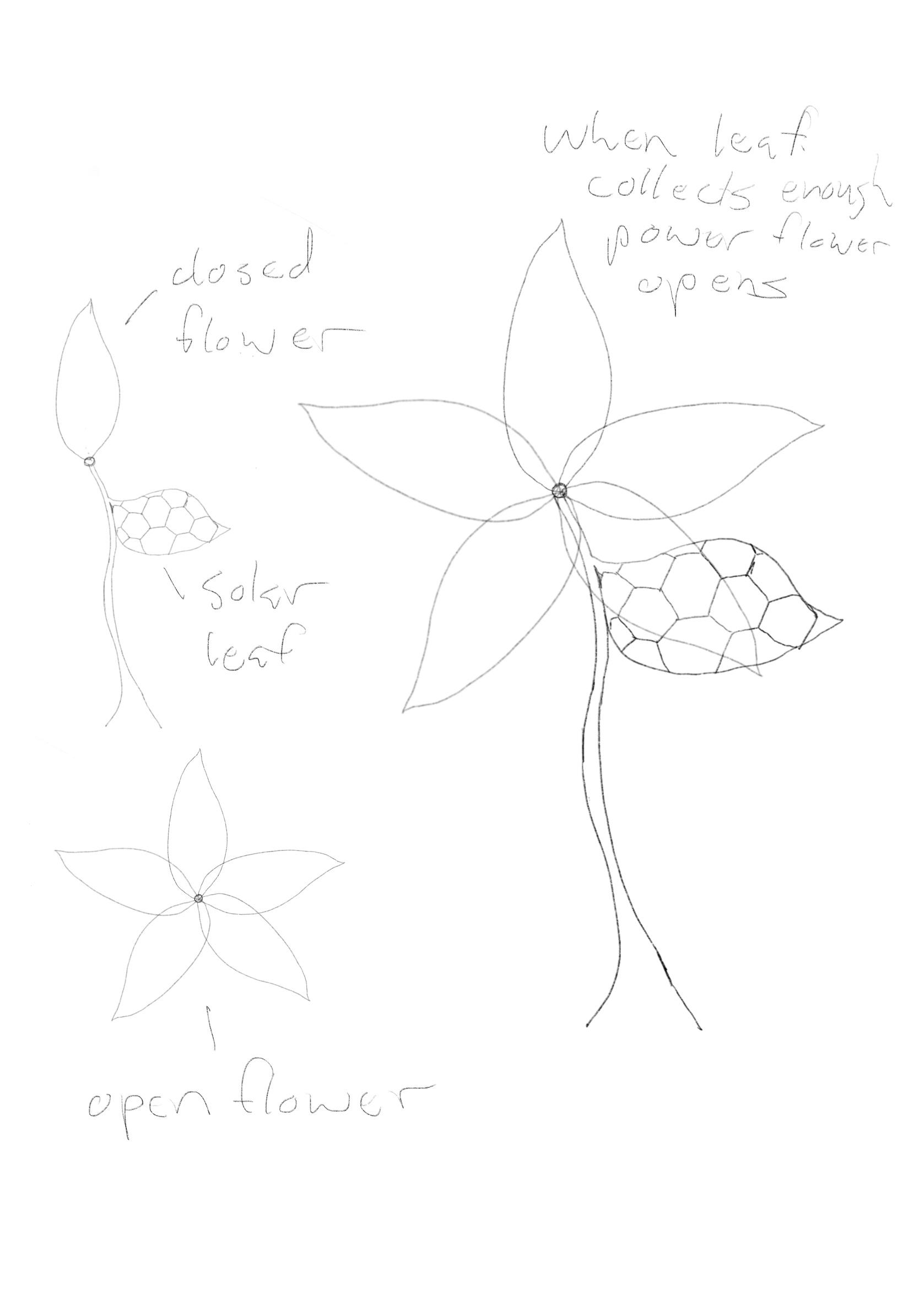 solar bloom sketch